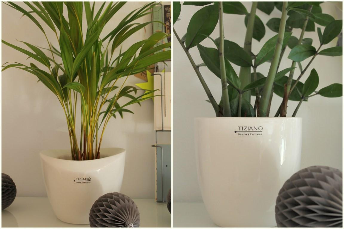 Deko und pflegetipps zum tag der zimmerpflanze tiziano for Design zimmerpflanzen