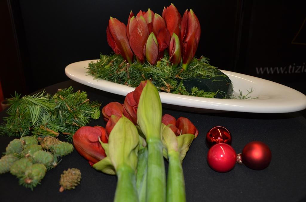 leuchtend rote weihnachtszeit mit amaryllis tiziano. Black Bedroom Furniture Sets. Home Design Ideas