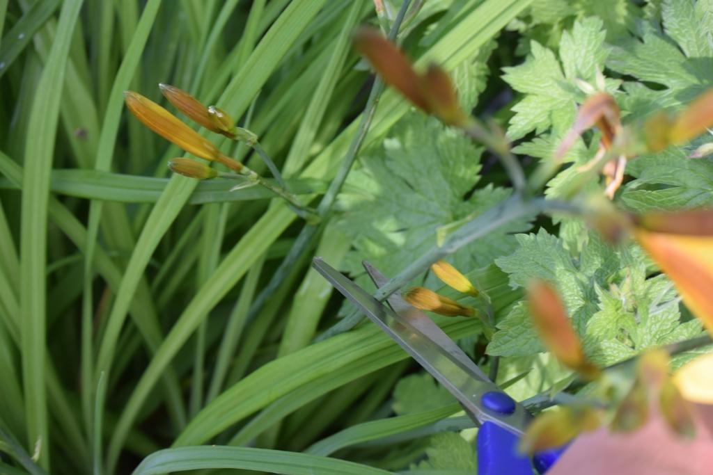 lilien schneiden lilien pflege lilie so pflegen sie sie in der wohnung lilie standort. Black Bedroom Furniture Sets. Home Design Ideas