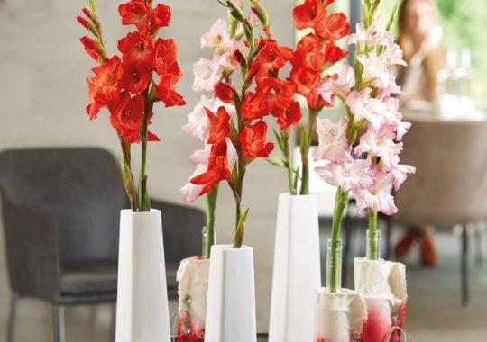 Sonntagsfreuden mit Gladiolen in Vase Sora