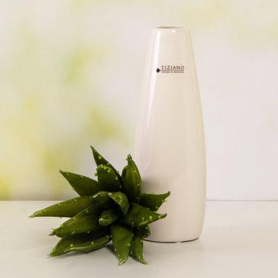 Agarve grün neben Vase