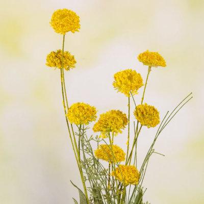 Sommerblümchen gelb