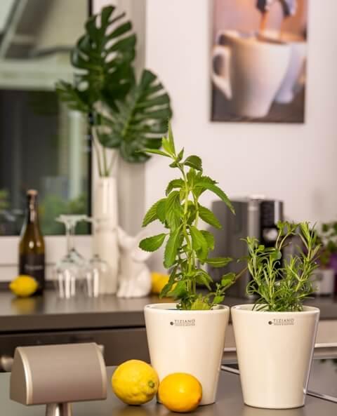 Sommerlicher Kräuter-Garten in der Küche | Tiziano