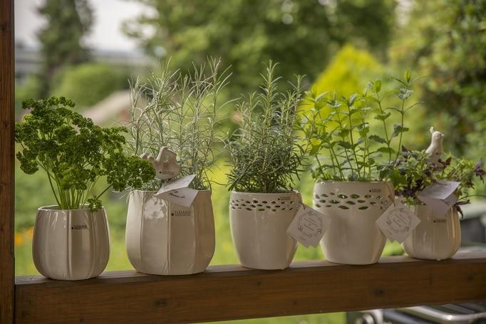 Sommerlicher Kräuter-Garten in der Küche