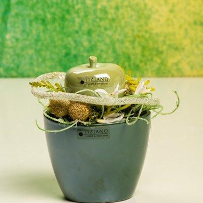 Kuebel Aranza Dolce grün