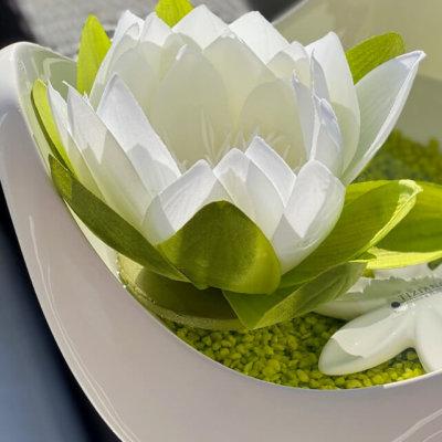 Seerose Seidenblume Schwimmbluete