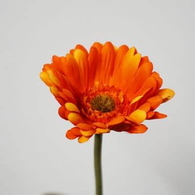 Dekoblume Gerbera groß orange