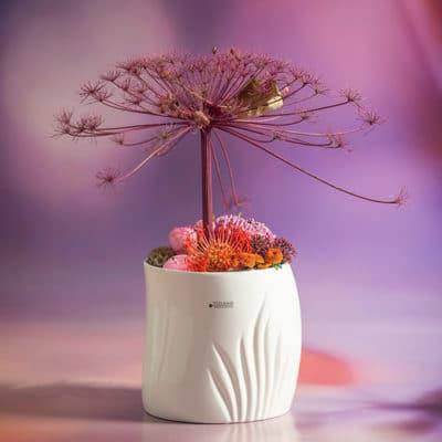 Blumentopf Mando creme - weiß