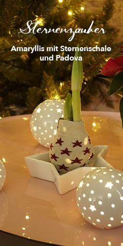 Placeholder Sternenzauber Amaryllis