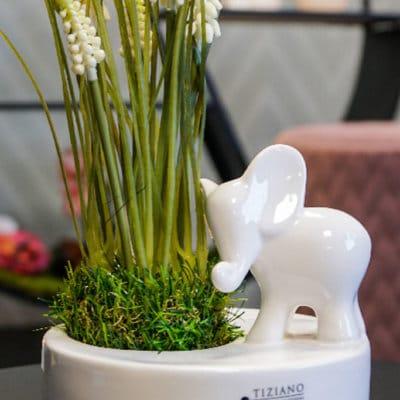 Dekoset Schale Zena mit Elefant Leon schauend und Muscari creme