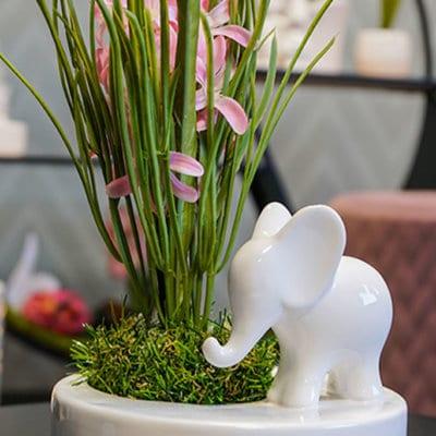 Dekoset Schale Zena mit Elefant Leon stehend und Hyazinthe pink