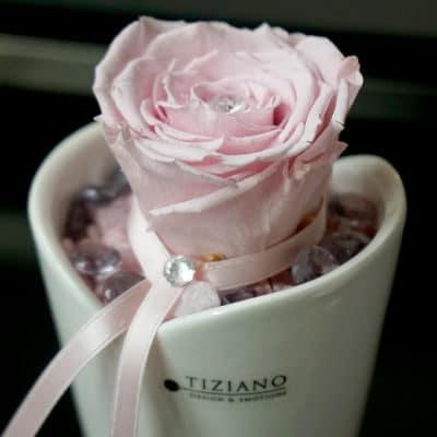 Dekoset Infinity Rosen rosa in Mini Blumentopf Romina