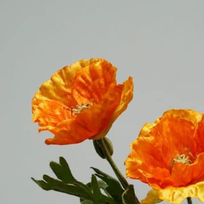 Deko Mohn orange