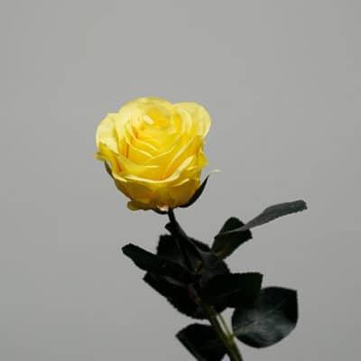 Deko Rose gefüllt gelb